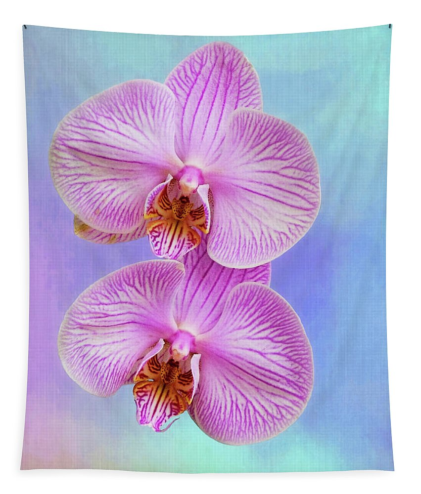 Orchid Tapestry featuring the photograph Orchid Delight - Two Blooms Against A Rainbow Background by Mitch Spence