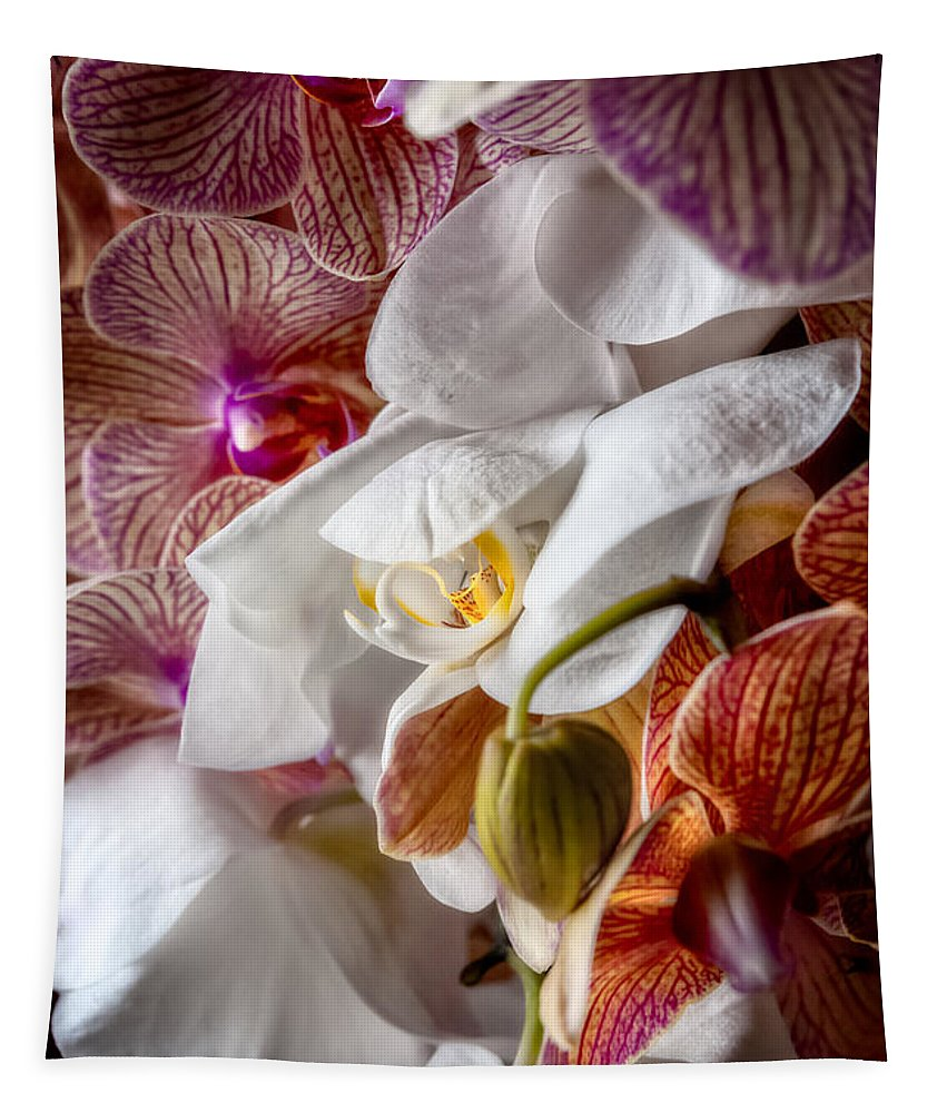 Orchid Tapestry featuring the photograph Orchid Iv by Christopher Holmes