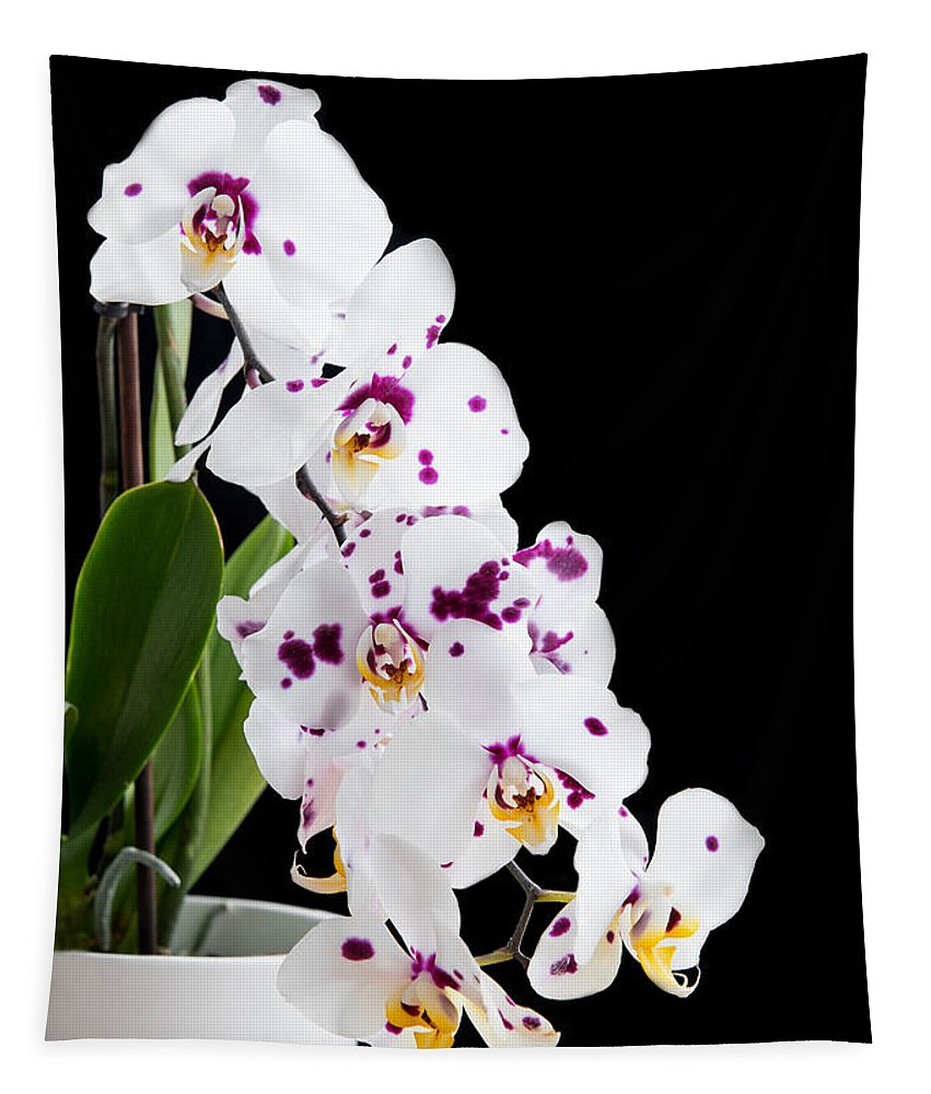 Blossom Tapestry featuring the photograph Orchid Phalaenopsis White Flower by Michalakis Ppalis