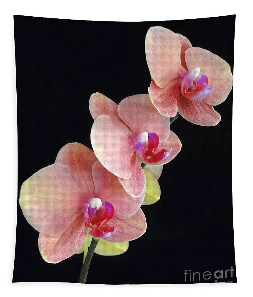 Orchid Tapestry featuring the photograph Orchids Reach For The Rainbow by Barbie Corbett-Newmin