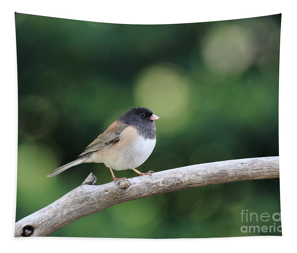 Wildlife Tapestry featuring the photograph Oregon Junco by Wingsdomain Art and Photography