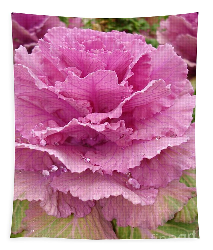 Ornamental Cabbage Tapestry featuring the photograph Ornamental Cabbage by Carol Groenen