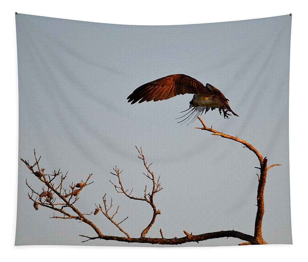 Tapestry featuring the photograph Osprey In Flight by Kim Bemis