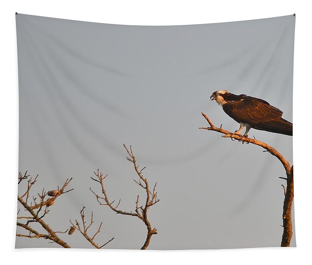 Tapestry featuring the photograph Osprey by Kim Bemis