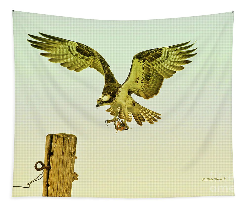 Raptor Tapestry featuring the photograph Osprey Pole Landing by Deborah Benoit