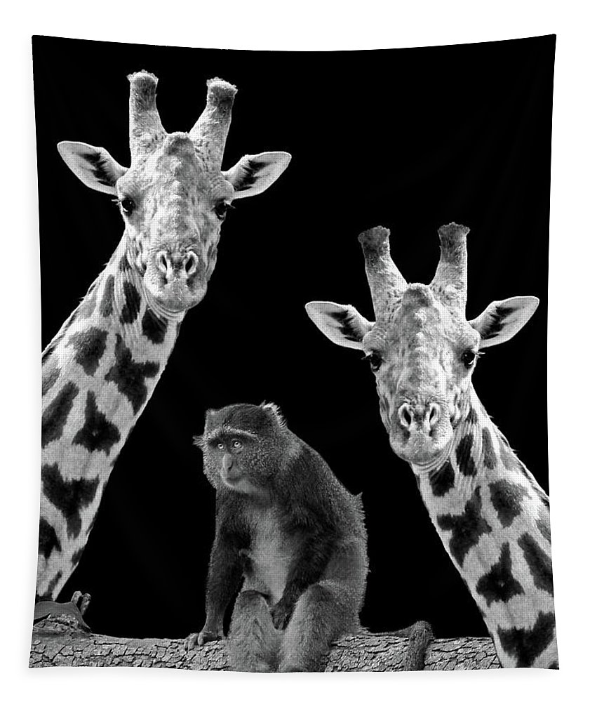 Giraffe Tapestry featuring the photograph Our Wise Little Friend - Monkey And Giraffes In Black And White by Gill Billington