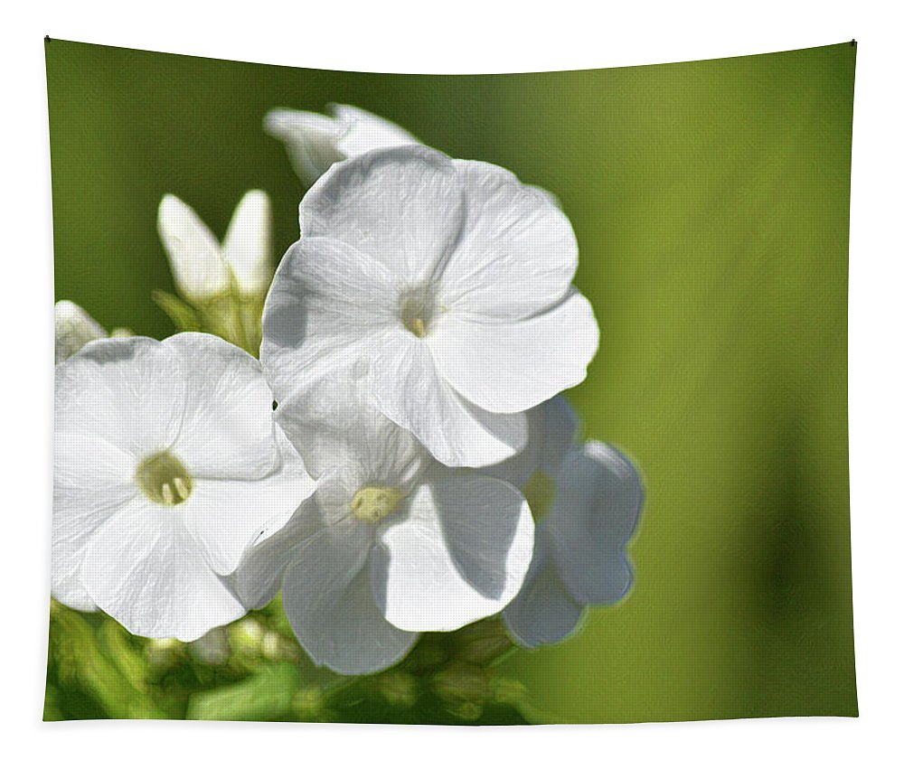 Flowers Tapestry featuring the photograph Painted Petals by Maria Keady
