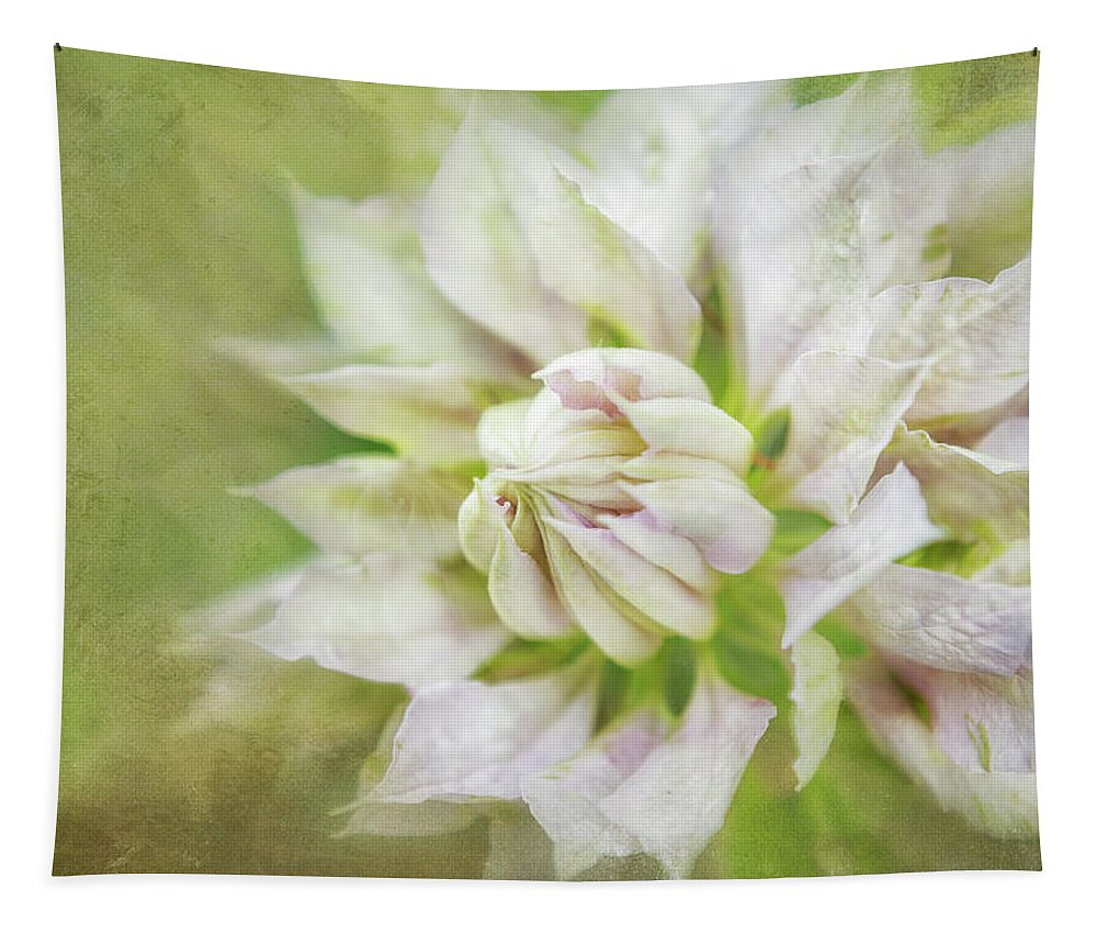 Clematis Tapestry featuring the photograph Pale Pink Clematis by Belinda Greb