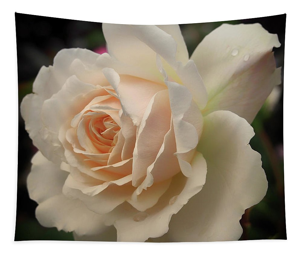 Rose Tapestry featuring the photograph Pale Yellow Rose After The Rain - Glow by Philip Openshaw