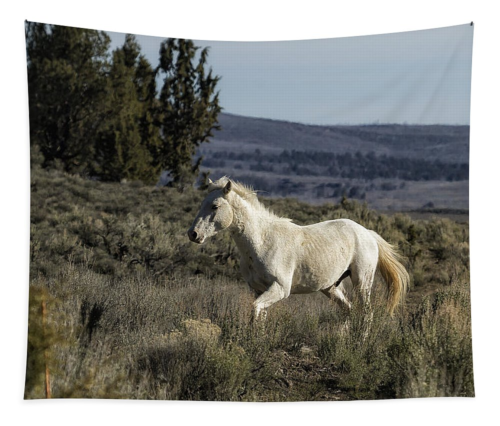 Wild Horses Tapestry featuring the photograph Pallaton by Belinda Greb