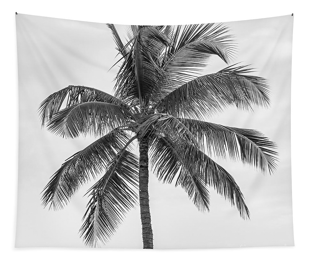 Palm Tapestry featuring the photograph Palm tree in black and white by Elena Elisseeva
