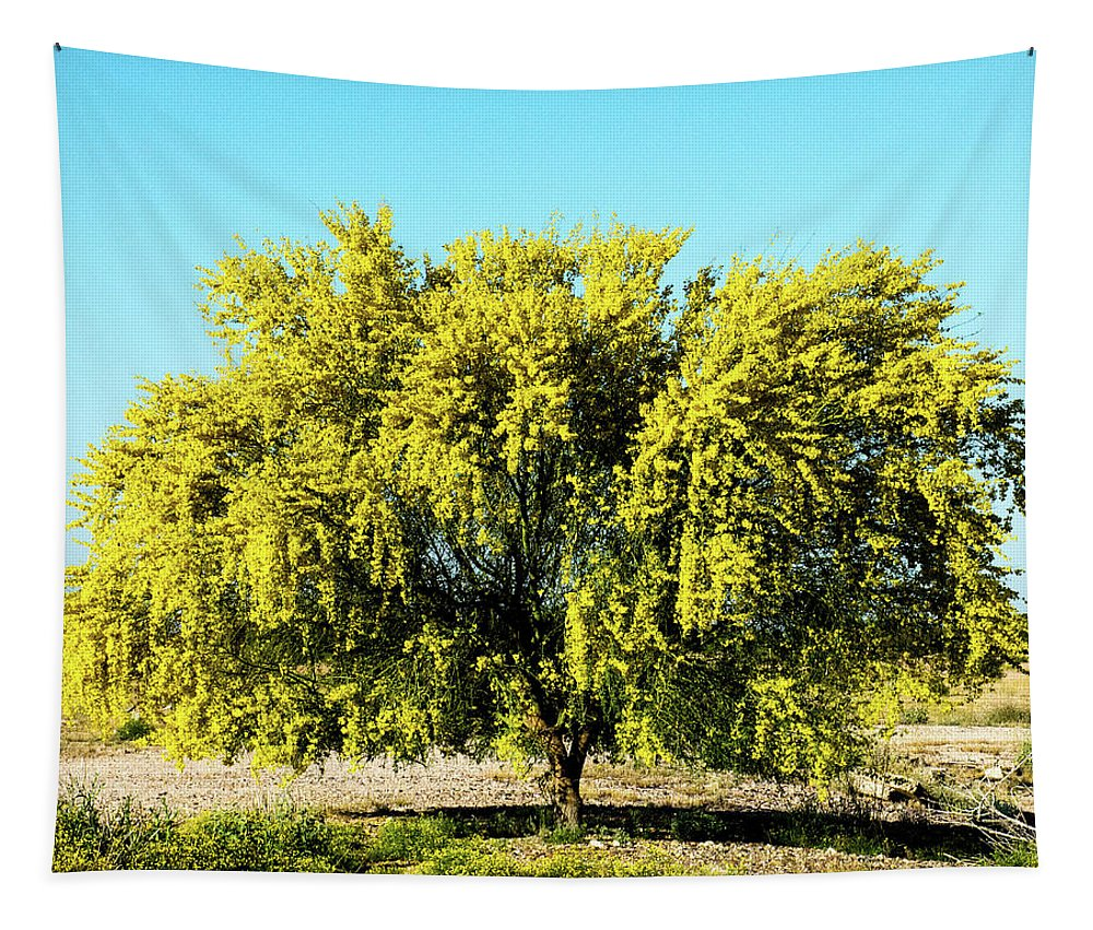 Palo Verde Tapestry featuring the photograph Palo Verde by Charles Scrofano Jr