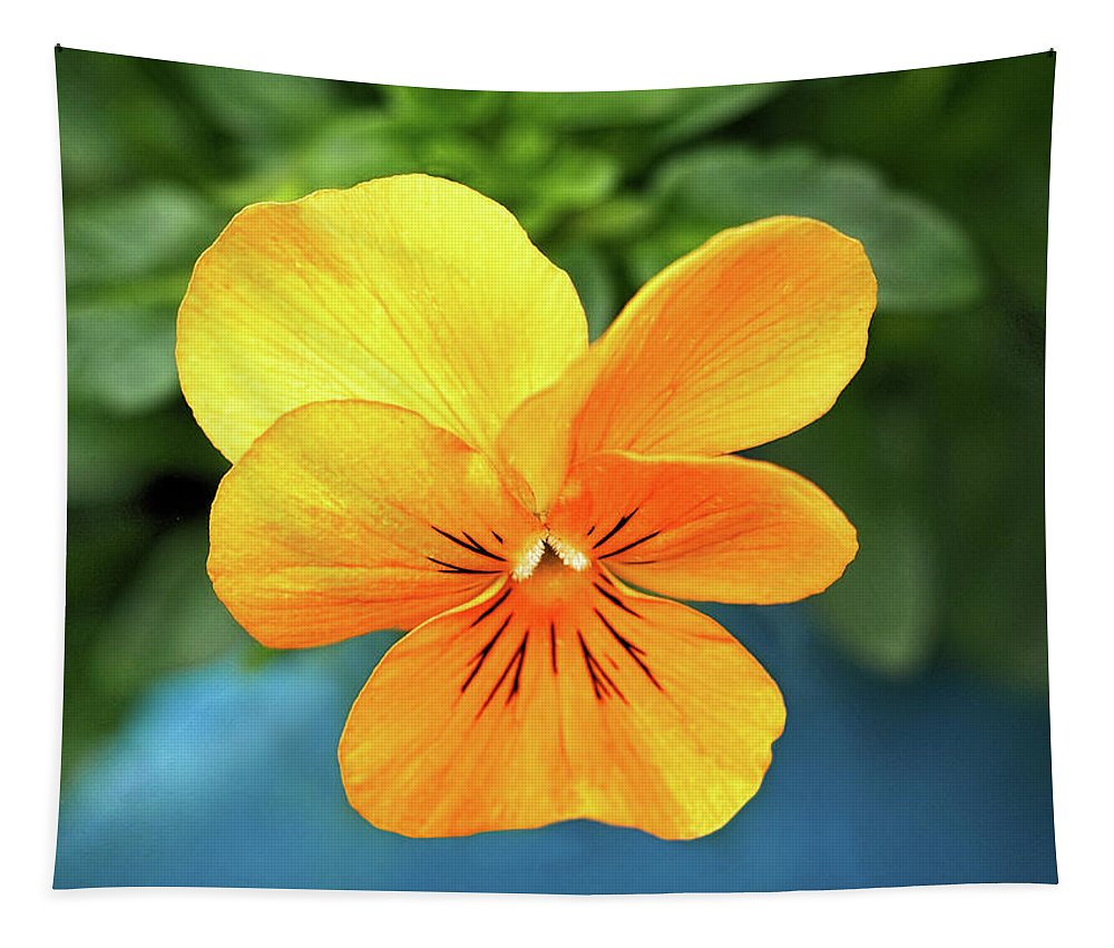 Pansy Tapestry featuring the photograph Pansy by Susie Peek