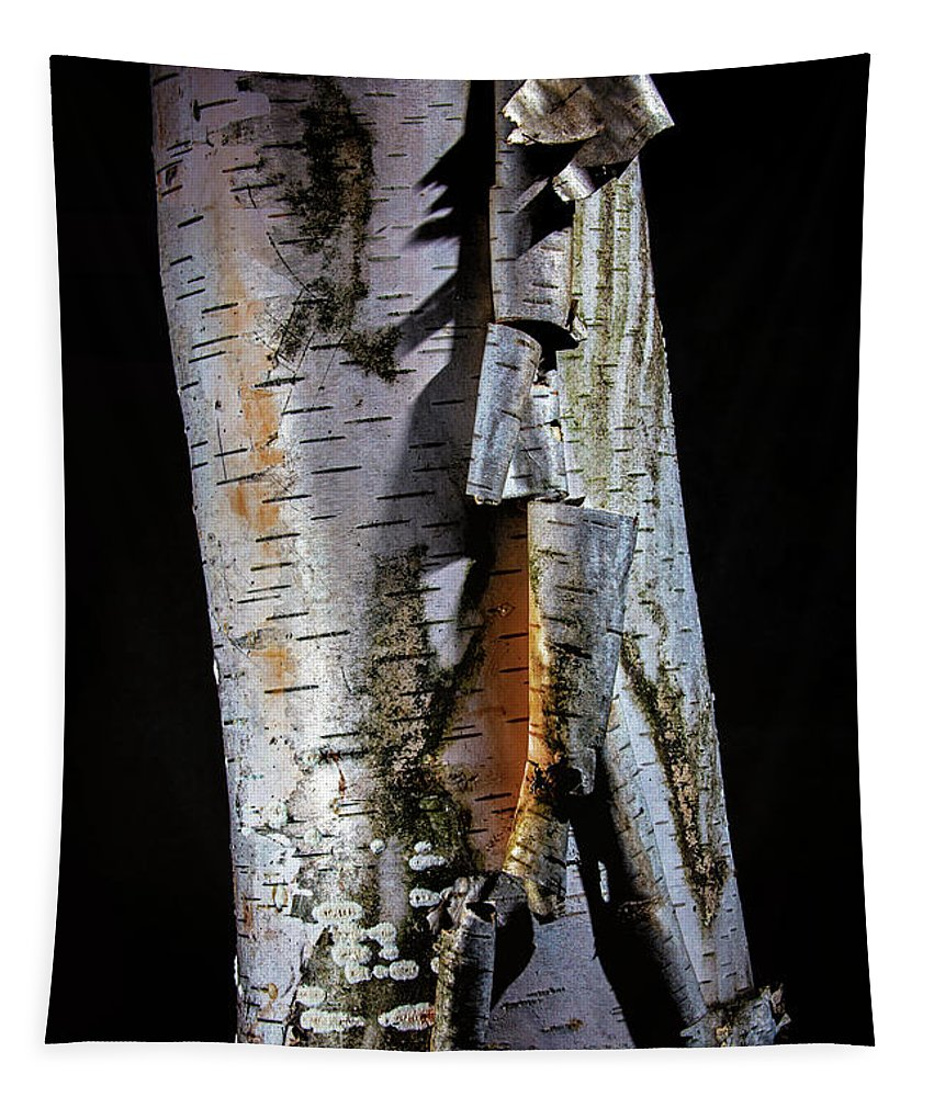 Tree Tapestry featuring the photograph Paper Birch by Robert Storost