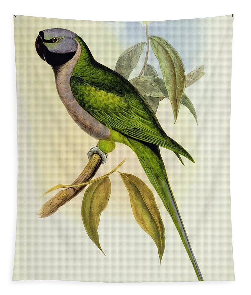 Parakeet Tapestry featuring the photograph Parakeet by John Gould
