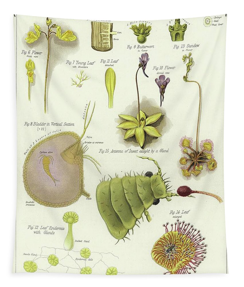 Botany Tapestry featuring the painting Parasites And Insectivorous Plants by English School