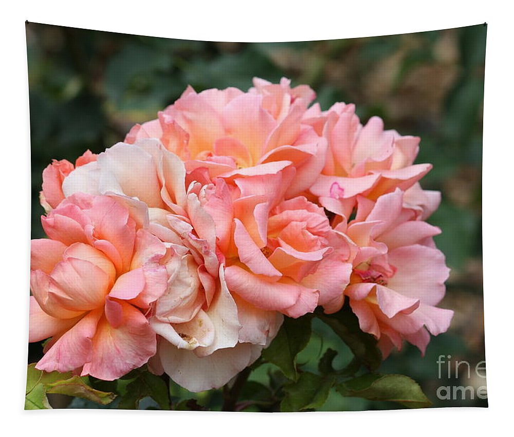 Roses Tapestry featuring the photograph Paris Garden Roses by Carol Groenen