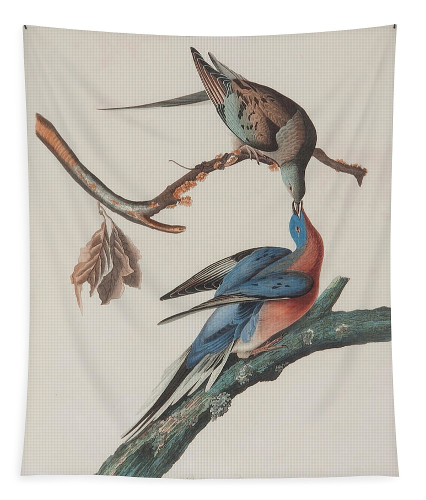 Painting Tapestry featuring the painting Passenger Pigeon by John J Audubon
