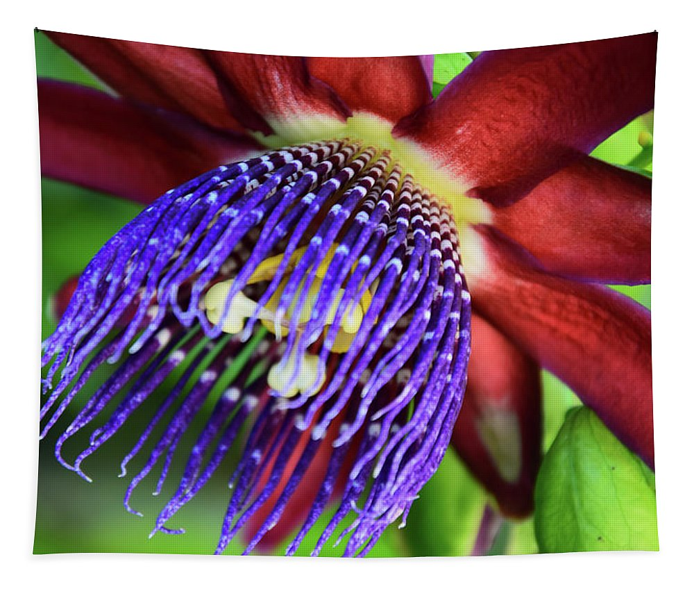Single Purple And Red Passion Flower In Full Bloom Single Passion Flower In Full Bloom Tapestry featuring the photograph Passion Flower Ver. 11 by Robert VanDerWal