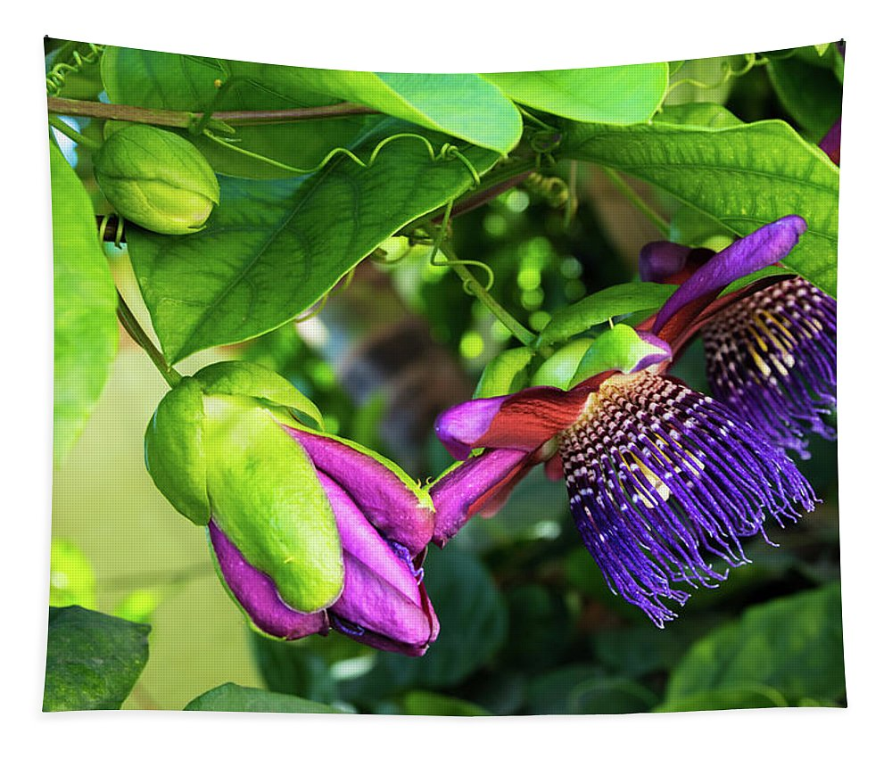 Passion Flower Vine Tapestry featuring the photograph Passion Flower Ver. 14 by Robert VanDerWal