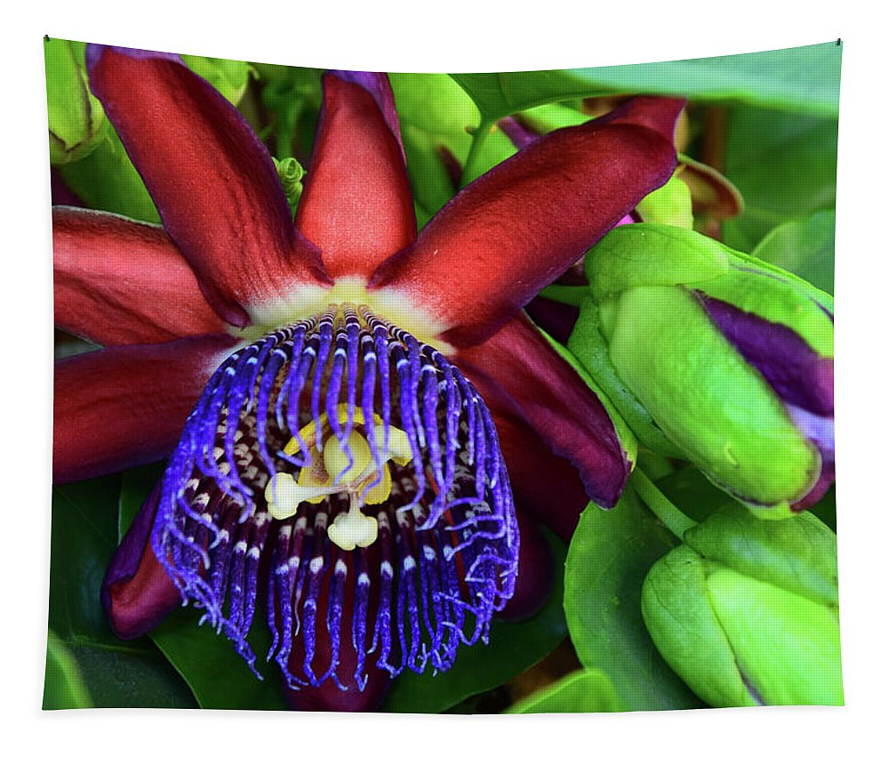 Passion Flower Tapestry featuring the photograph Passion Flower Ver. 17 by Robert VanDerWal