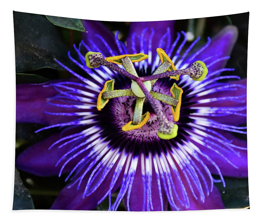 Single Purple And White Passion Flower Close Up Tapestry featuring the photograph Passion Flower Ver. 4 by Robert VanDerWal