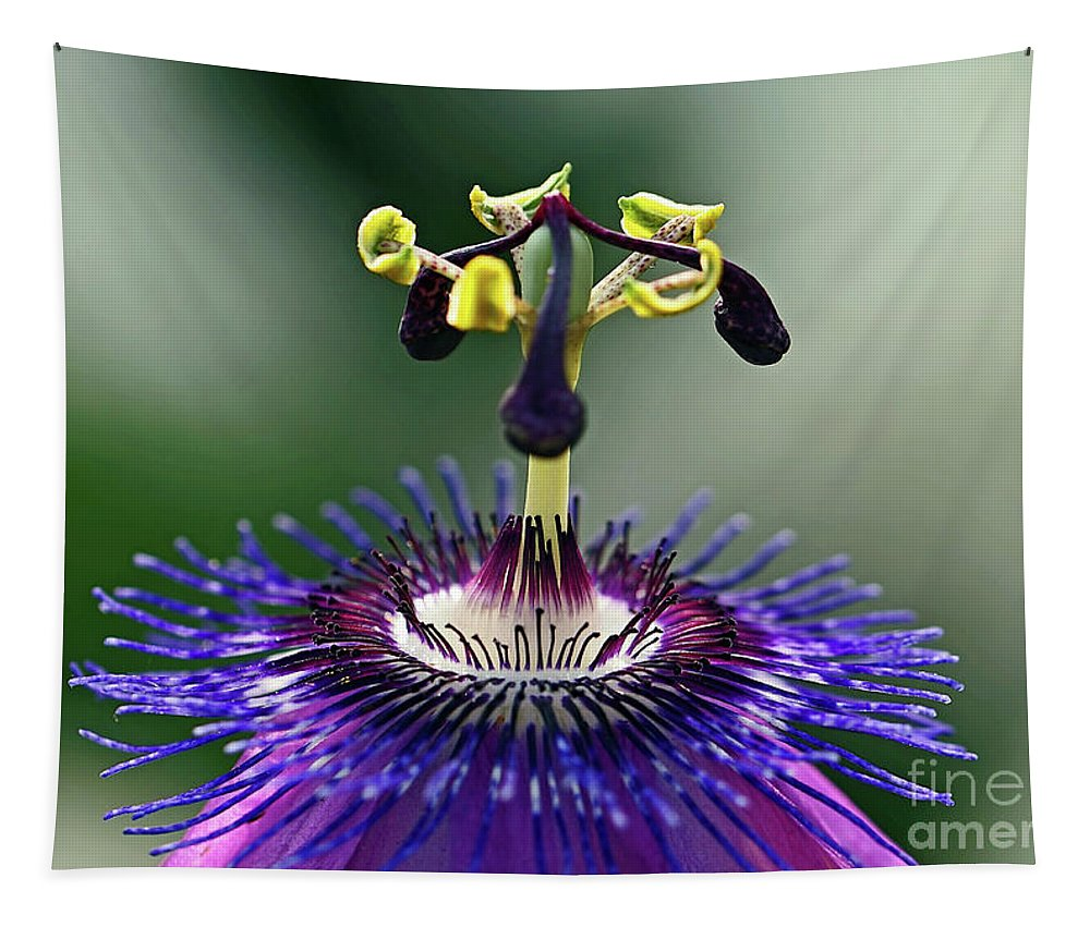 Passion Flower Tapestry featuring the photograph Passion For Purple by Davids Digits