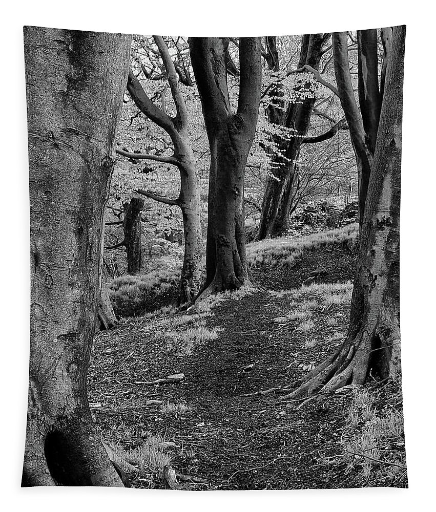 Nature Tapestry featuring the photograph Path In Crownest Woods by Philip Openshaw