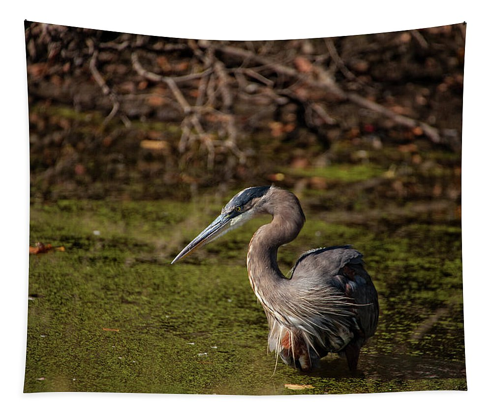 Moment Of The Heron Tapestry featuring the photograph Patiently Waiting by Karol Livote