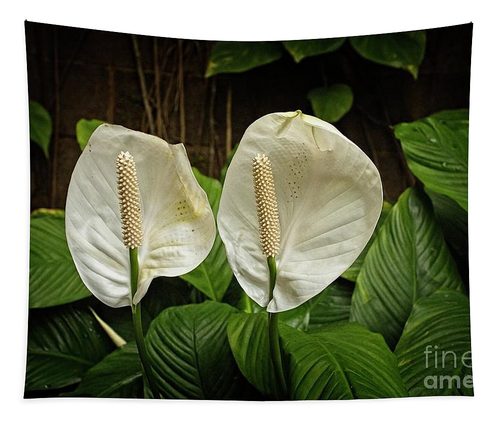 Peace Lily Tapestry featuring the photograph Peace On Earth by Jon Burch Photography