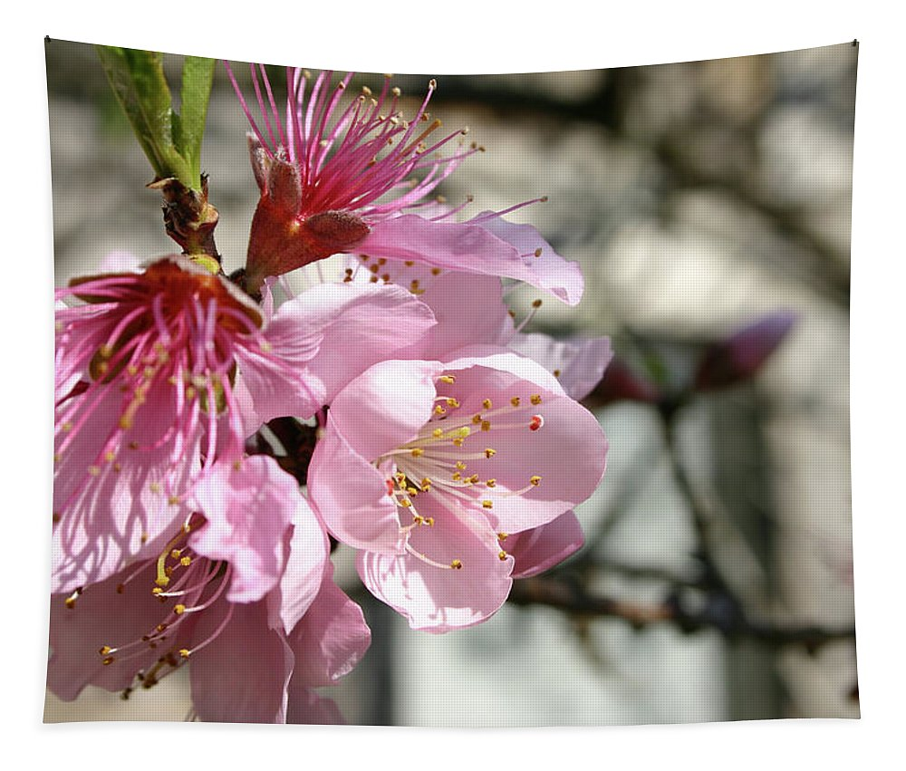 Peach Blossoms Tapestry featuring the photograph Peach Blossoms by Michael Munster