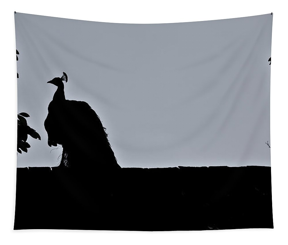 Peacock Tapestry featuring the photograph Peacock at Night by Douglas Barnett