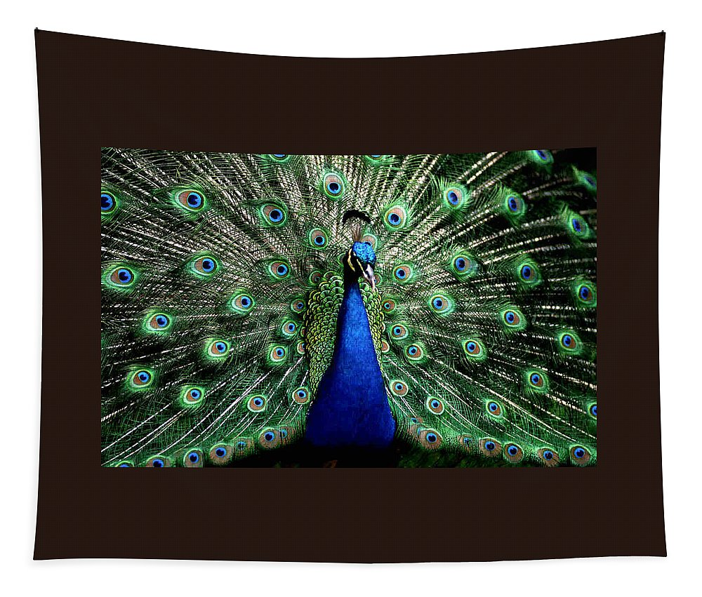 Peacock Tapestry featuring the photograph Peacock by Dragica Micki Fortuna