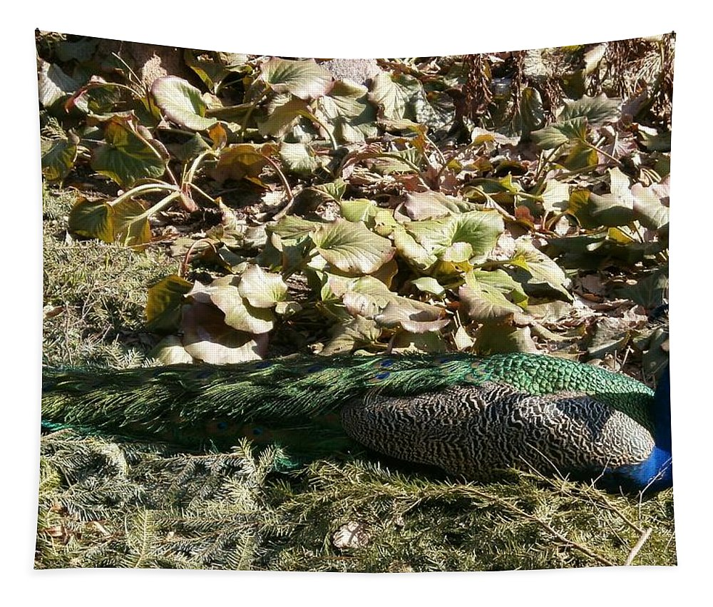 Peacock Tapestry featuring the photograph Peacock by Maria Woithofer