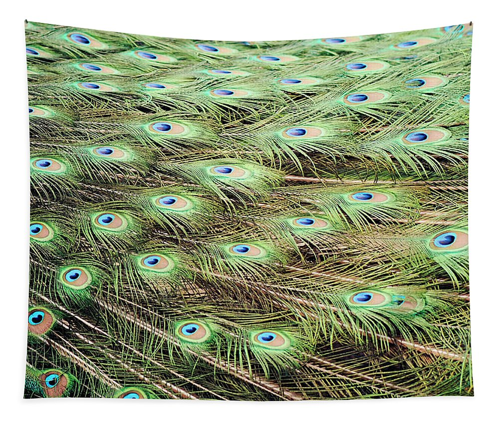Animal Tapestry featuring the photograph Peacock Tail Feathers by Monika Tymanowska
