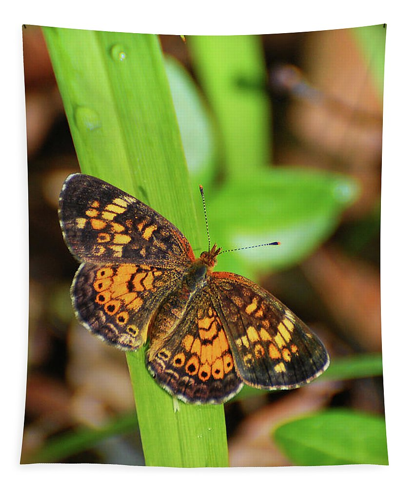 Pearl Crescent Butterfly Tapestry featuring the photograph Pearl Crescent Butterfly by Christina Rollo