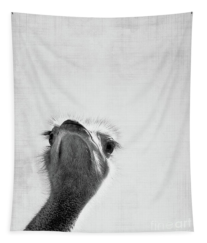 Ostrich Tapestry featuring the photograph Peekaboo Ostrich by Delphimages Photo Creations