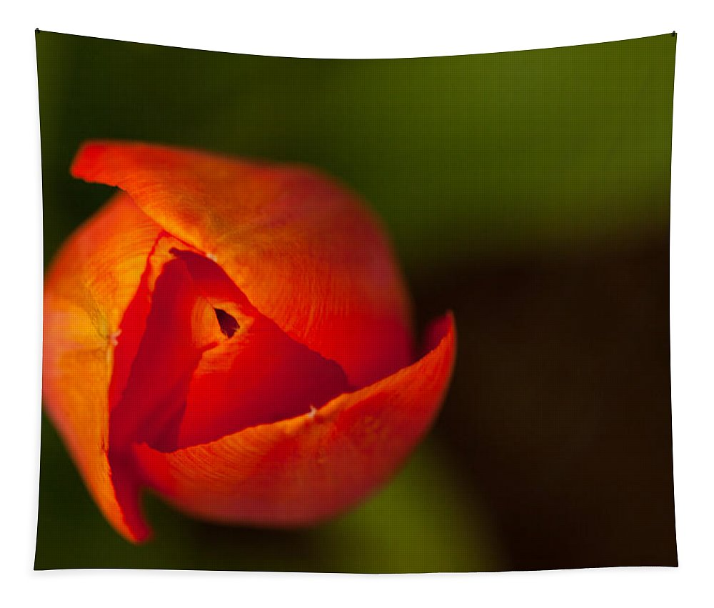 Tulip Petals Tapestry featuring the photograph Peeling Away The Petals by Karol Livote