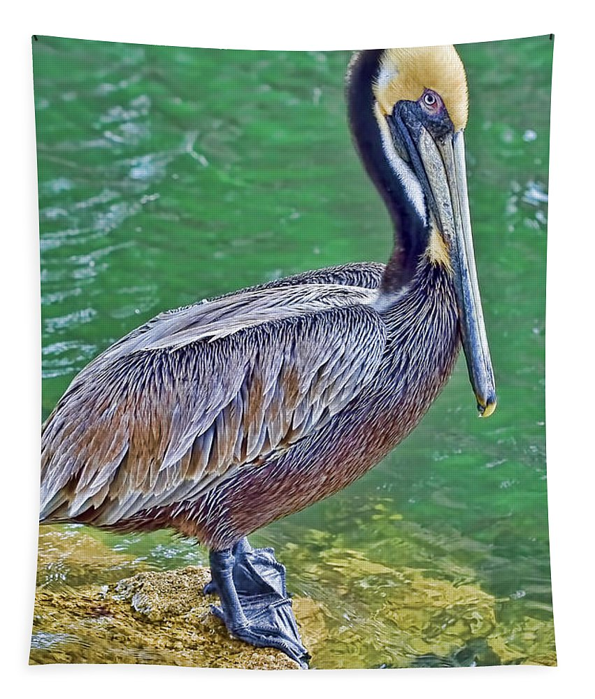 Pelican Tapestry featuring the photograph Pelican By The Pier by Deborah Benoit