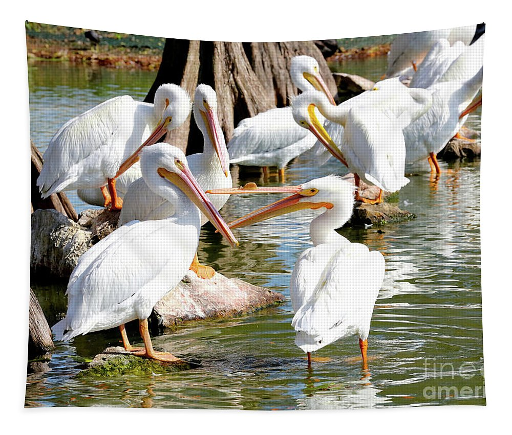 Fighting Birds Tapestry featuring the photograph Pelican Squabble by Carol Groenen