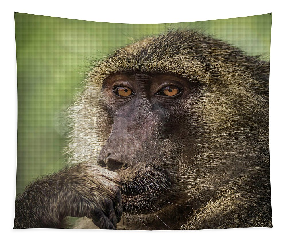 Baboon Tapestry featuring the photograph Pensive Baboon by Teresa Wilson