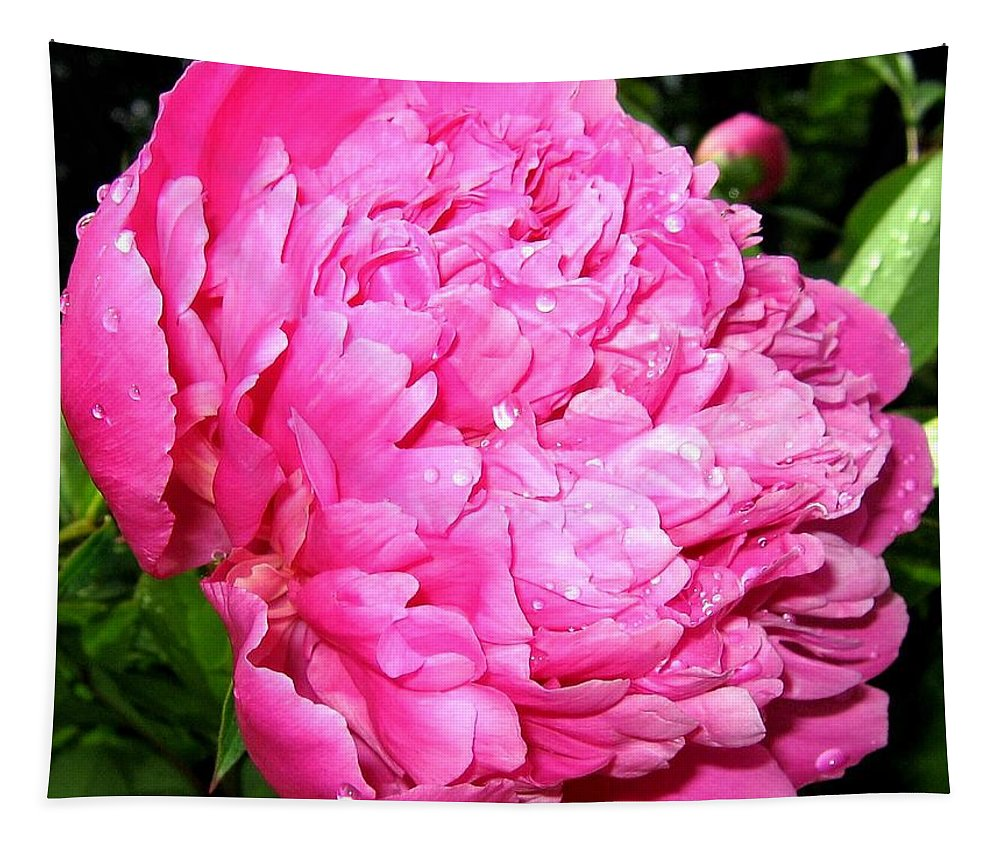 Peony Tapestry featuring the photograph Peony And Raindrops by Will Borden