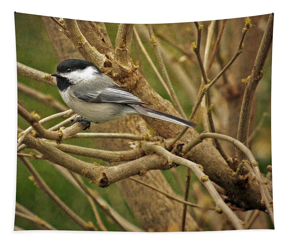 Perched Tapestry featuring the photograph Perched by Susan McMenamin