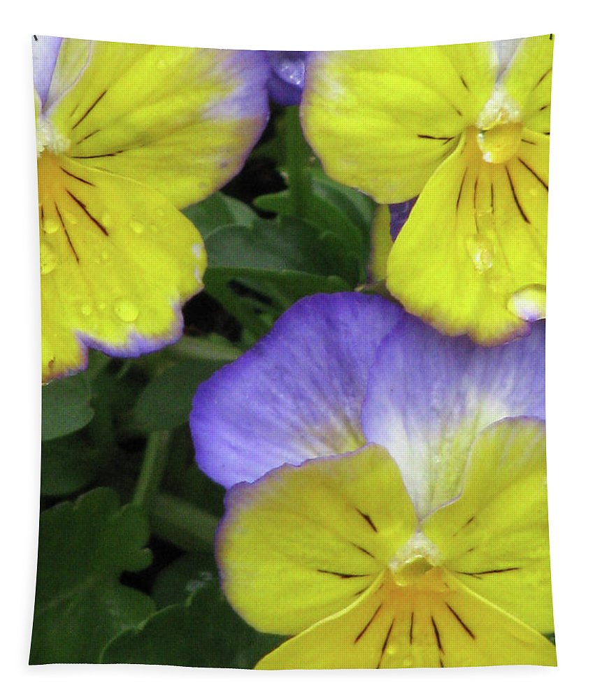Pansy Tapestry featuring the photograph Perfectly Pansy 14 by Pamela Critchlow