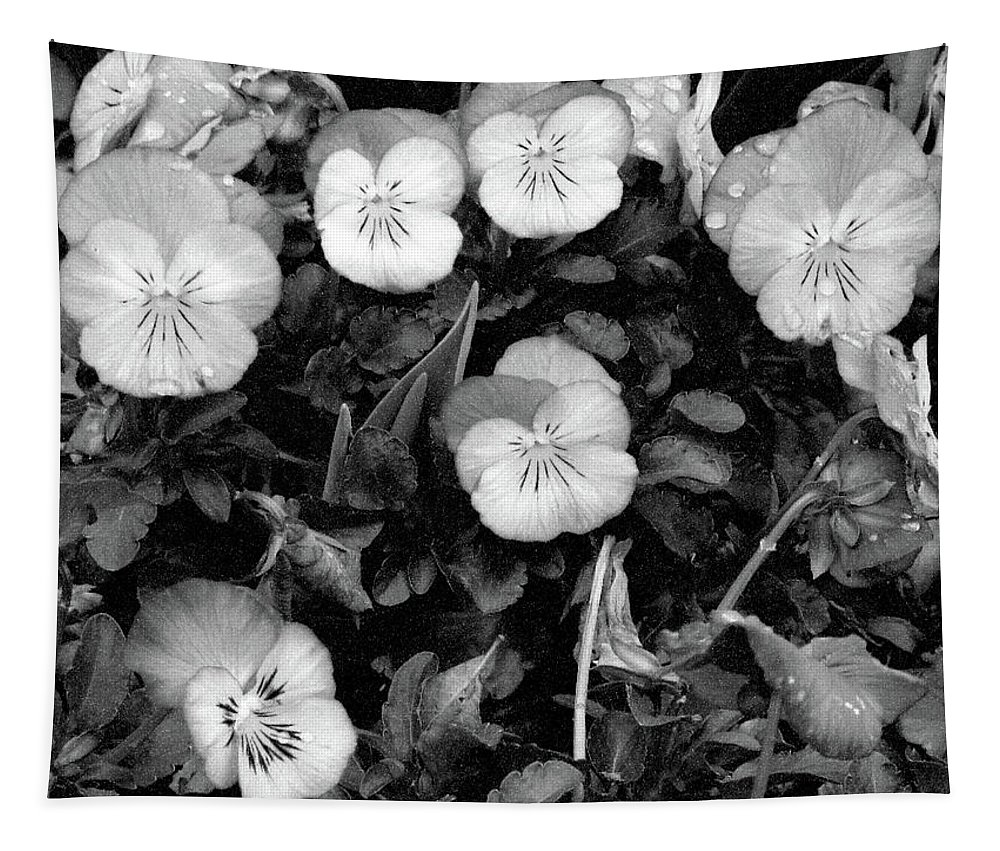 Pansy Tapestry featuring the photograph Perfectly Pansy 18 - Bw - Water Paper by Pamela Critchlow