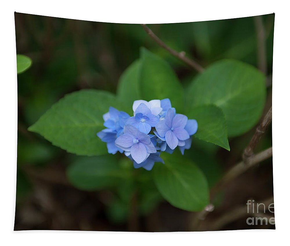 Hydrangea Tapestry featuring the photograph Petals And Thorns by Dale Powell