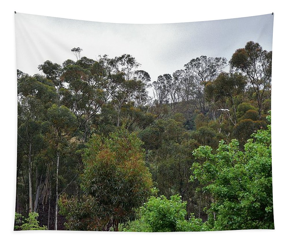 Linda Brody Tapestry featuring the photograph Peters Canyon In The Rain 8 by Linda Brody