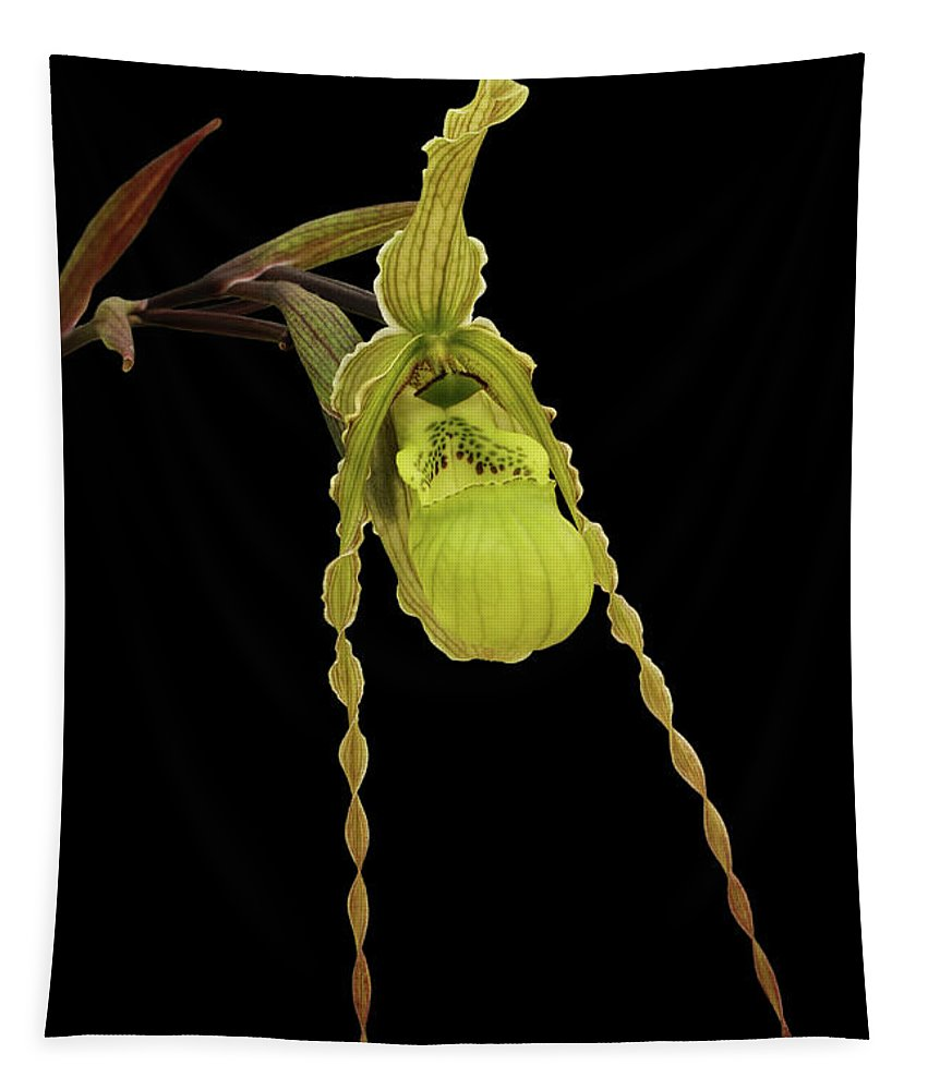 Orchid Tapestry featuring the photograph Phragmipedium Richteri Orchid by Judy Whitton