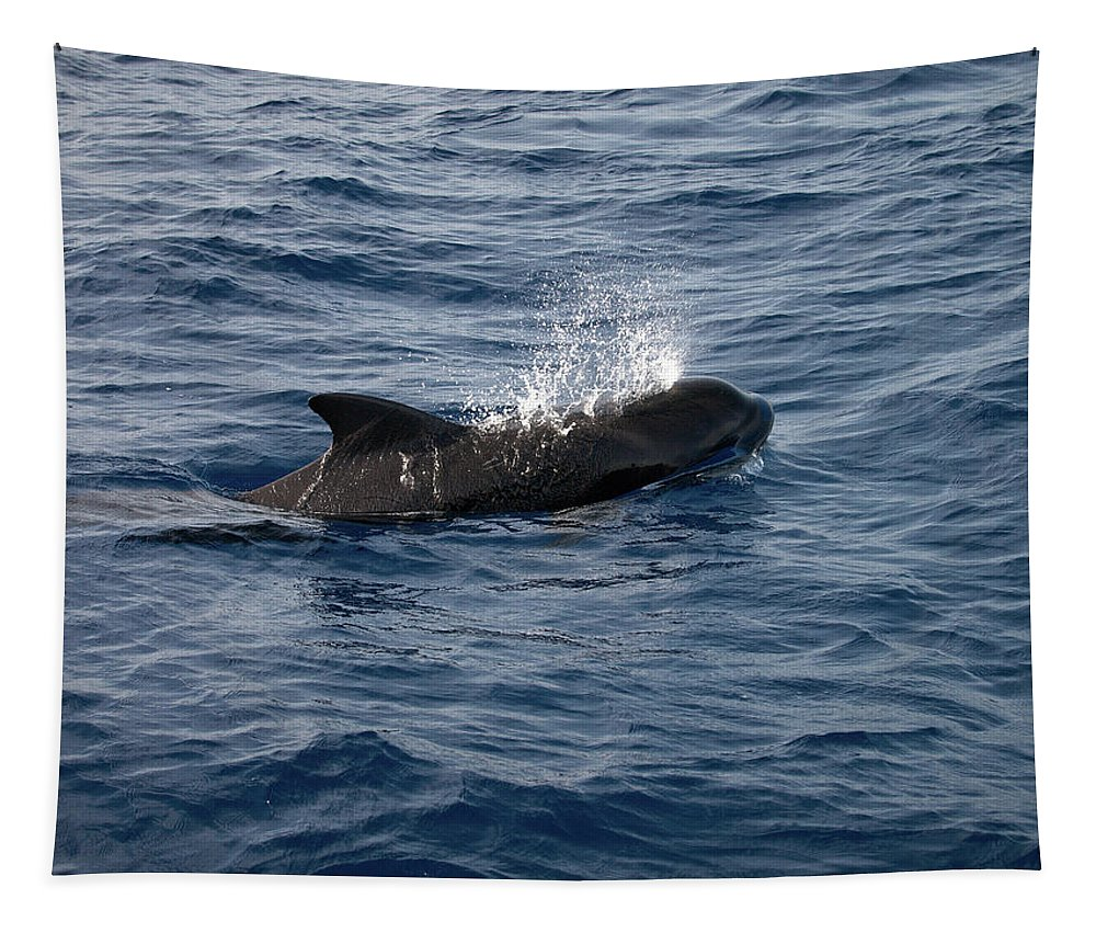 Valasretki Tapestry featuring the photograph Pilot Whale 6 by Jouko Lehto