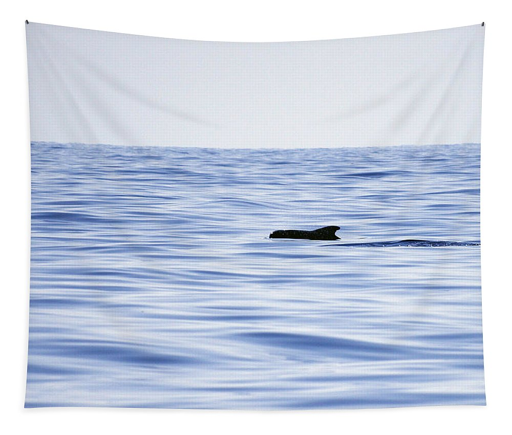 Spain Tapestry featuring the photograph Pilot Whales 2 by Jouko Lehto